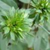 Green Flowers for the Garden