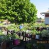 2015 Annual Plant Sale