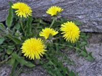 Coping with Weeds