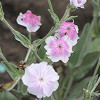DTEGC Spring Plant Sale