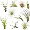 Lunch and Learn: Air Plants
