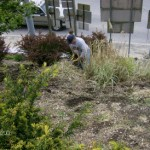 Larry cutting grasses