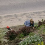 And Julie pulling weeds. I know Monica was around somewhere but she was being camera shy.