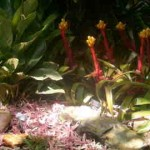 More bromeliads.