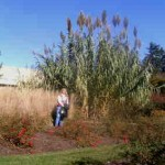 Lisa among the Arundo grass