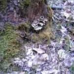A fungus amongus.