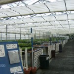 Greenhouse at Bluestone