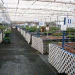 Staging area Bluestone Perennials