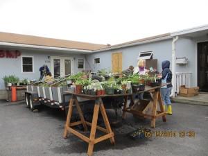 More Plant Sale